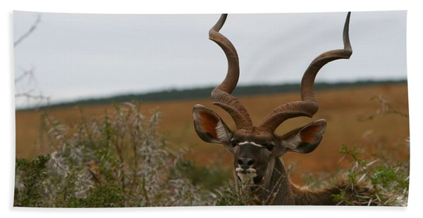 Greater Kudu Beach Towel