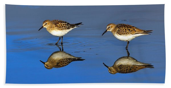 Juvenile White-rumped Sandpipers Beach Towel