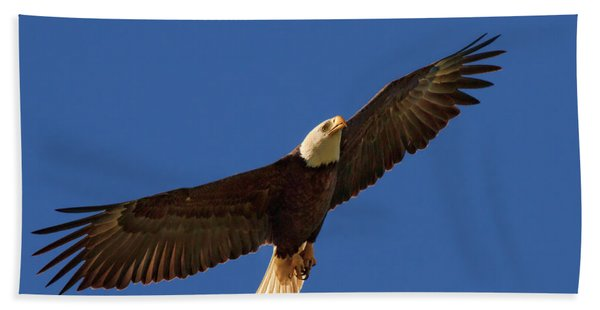 Majestic Bald Eagle Beach Sheet