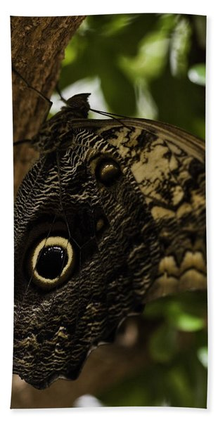 Mournful Owl Butterfly Beach Sheet