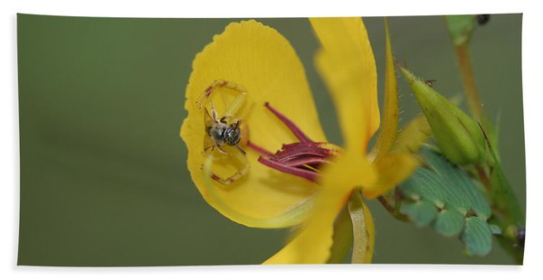 Partridge Pea And Matching Crab Spider With Prey Beach Towel