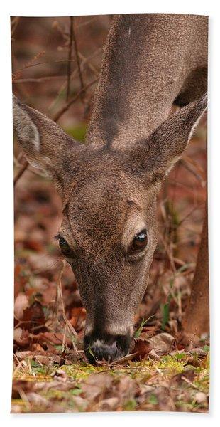 Portrait Of  Browsing Deer Two Beach Sheet