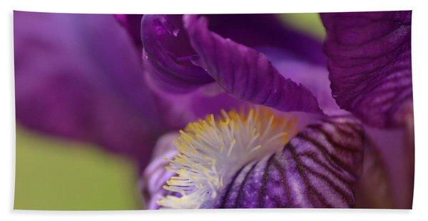 Purple Iris 1 Beach Towel