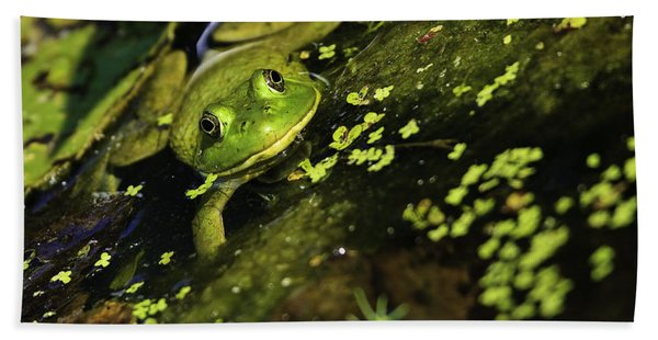 Rana Clamitans Or Green Frog Beach Sheet