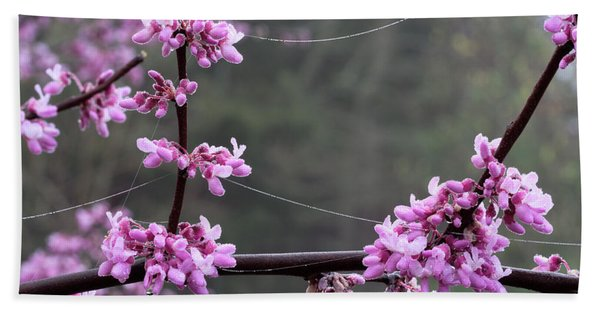 Redbud With Webs And Dew Beach Towel