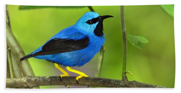 Shining Honeycreeper Beach Towel