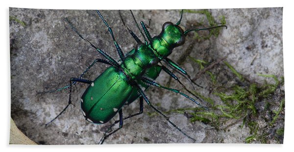 Six-spotted Tiger Beetles Copulating Beach Towel