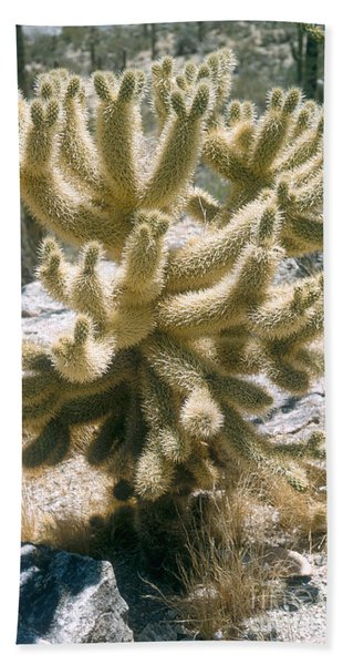 Teddy Bear Cholla Beach Towel
