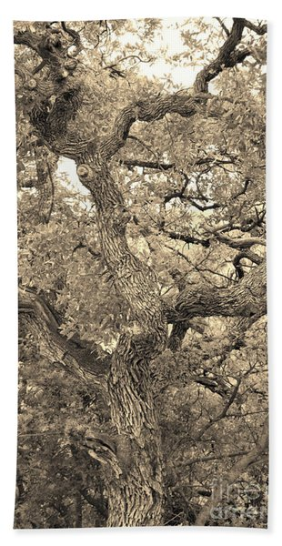 The Wicked Tree Beach Towel