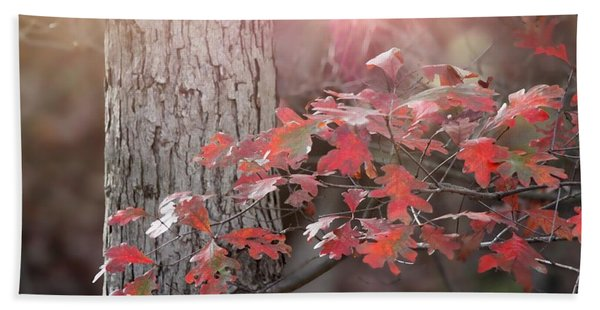 Autumn In The Woods Beach Towel