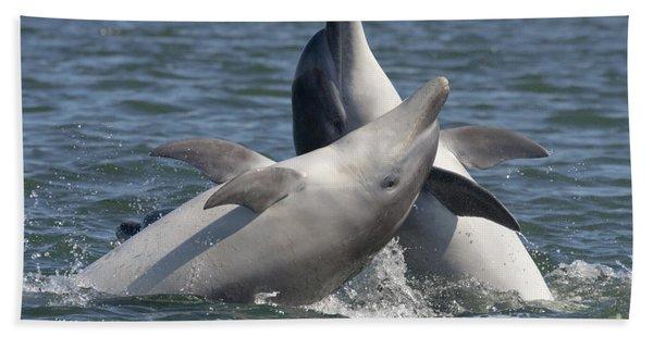 Bottlenose Dolphins  - Scotland  #15 Beach Towel