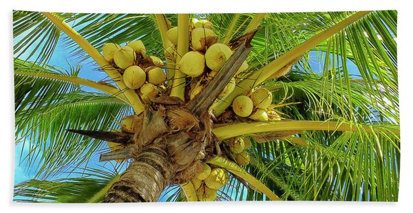 Coconuts In Tree Beach Towel