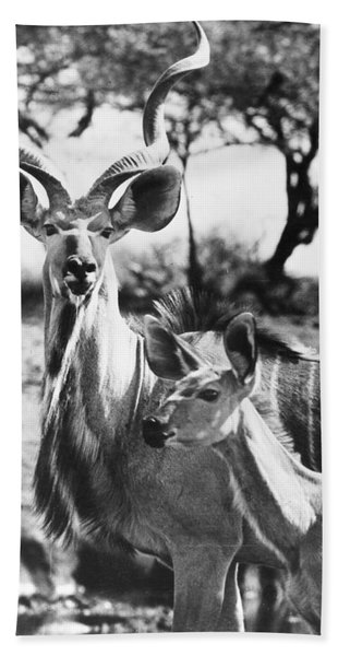 East Africa: Kudu Beach Towel