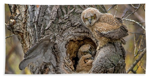 Great Horned Owlets In A Nest Beach Towel