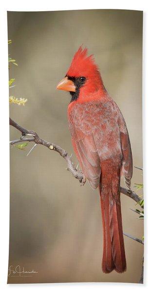 Northern Cardinal Cfh17765 Beach Towel