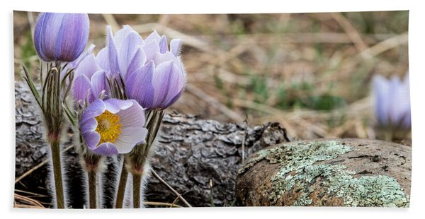 Pasque Flower Beach Towel