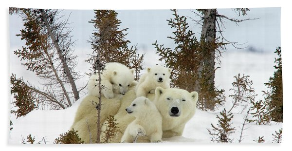 Polar Bear Ursus Maritimus Trio Beach Towel