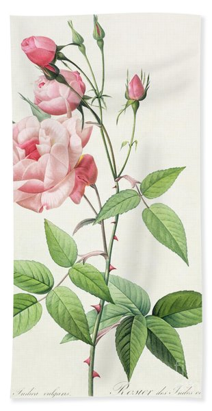Rosa Indica Vulgaris Beach Towel