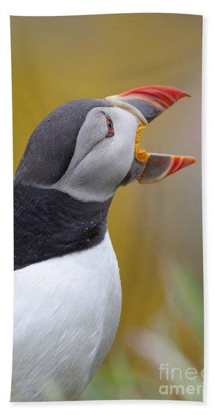 Atlantic Puffin - Scotland Beach Towel