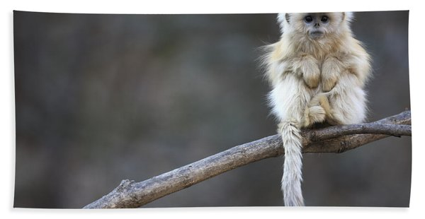 Golden Snub-nosed Monkey Rhinopithecus Beach Towel