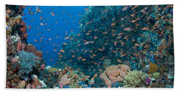Reef Scene With Corals And Fish Beach Towel