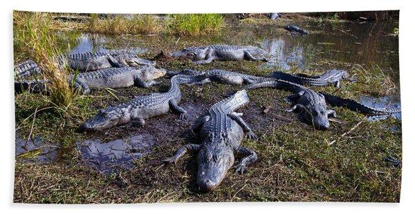 Alligators 280 Beach Towel