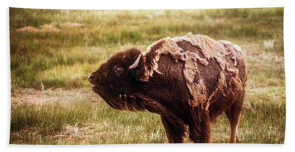 American Bison Into The Wind Beach Sheet