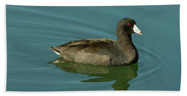 American Coot Beach Towel