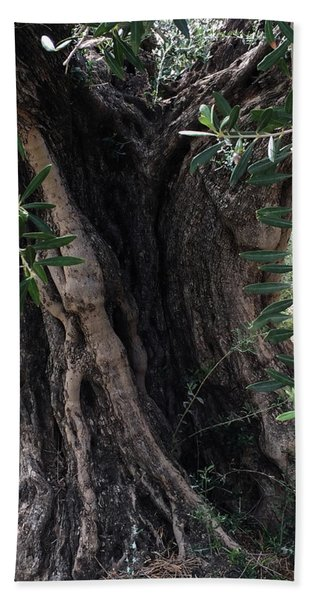 Beach Towel featuring the photograph Ancient Old Olive Tree Spain by Colette V Hera Guggenheim