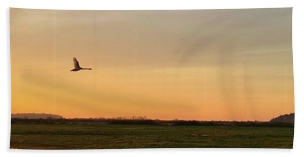 Another Iphone Shot Of The Swan Flying Beach Towel