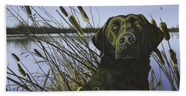 Anticipation - Black Lab Beach Towel