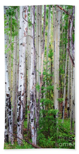 Aspen Grove In The White Mountains Beach Towel