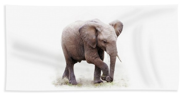 Baby African Elephant Isolated On White Beach Towel
