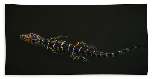 Baby Alligator Delray Beach Florida Beach Towel