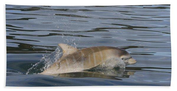Baby Bottlenose Dolphin - Scotland  #35 Beach Towel