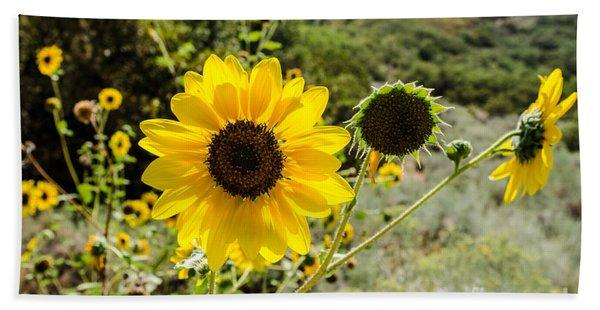 Backlit Sunflower Aka Helianthus Beach Towel