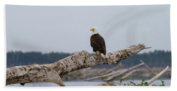 Bald Eagle #1 Beach Towel