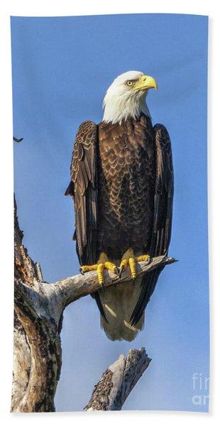 Bald Eagle 6366 Beach Towel