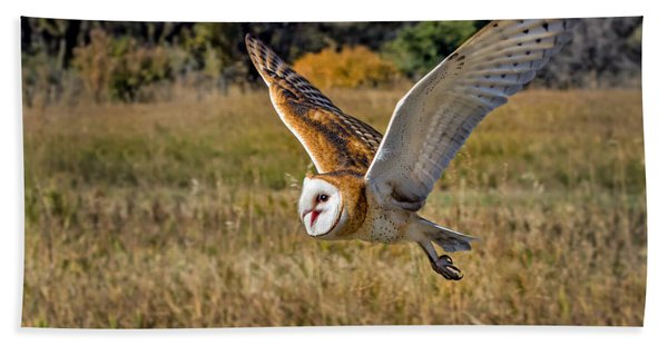 Barn Owl Flight 6 Beach Towel