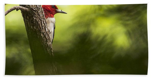 Beauty In The Woods Beach Towel