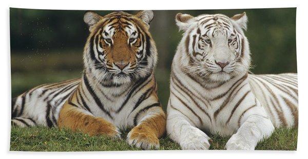 Bengal Tiger Team Beach Towel