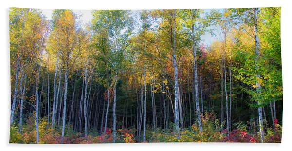 Beach Towel featuring the photograph Birch Trees Turn To Gold by Jeff Folger