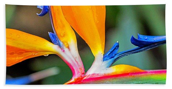 Bird Of Paradise After The Rain Beach Towel