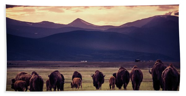 Bison Herd Into The Sunset Beach Sheet