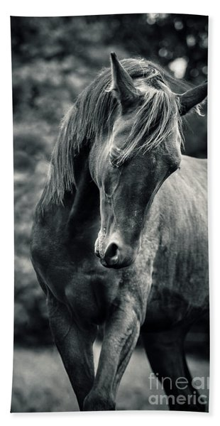 Black And White Portrait Of Horse Beach Towel