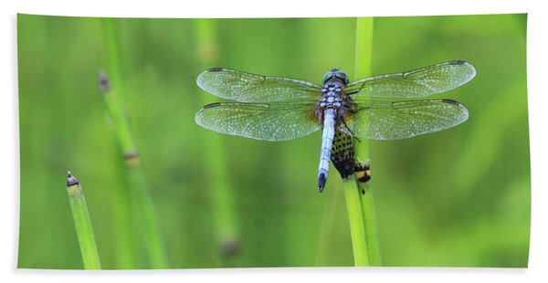 Blue Dasher Beach Towel