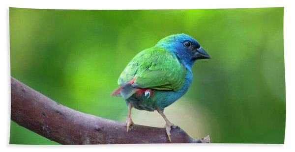 Blue-faced Parrotfinch Beach Towel