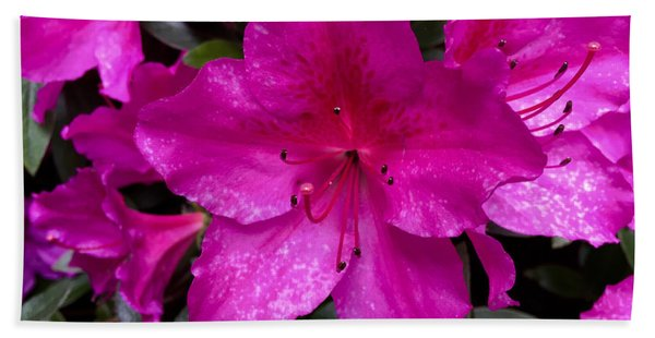 Bold Pink Flower Beach Sheet