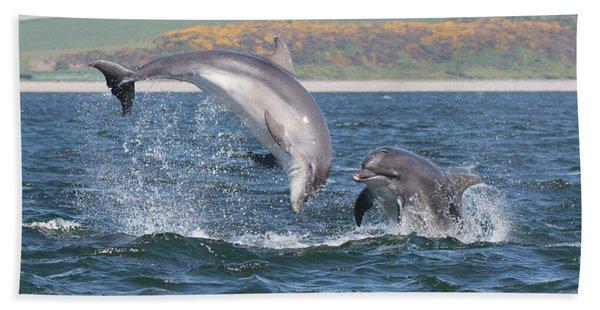 Bottlenose Dolphin - Moray Firth Scotland #49 Beach Towel