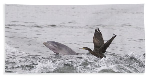 Baby Bottlenose Dolphin - Scotland #10 Beach Towel